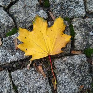 秋のペトジーン公園の葉っぱ。 in プラハ