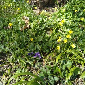 プラハのガマ君、やっとお目覚め。ペトジーンの春散歩(注意!爬虫類の画像あり)