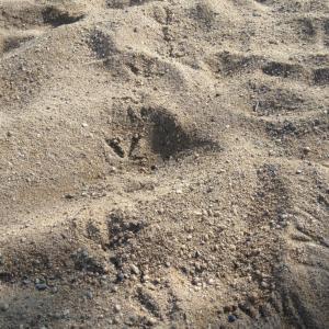 動物の足跡クイズ。〜問題と答え〜