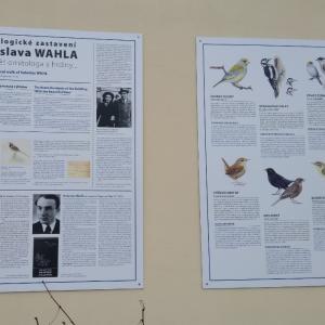 プラハで見かけることのできる鳥達 。