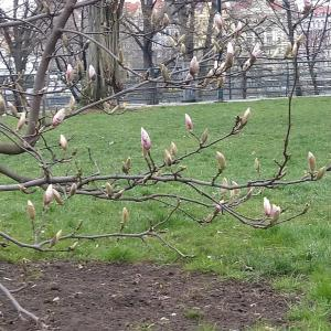 プラハのサクレ・クール公園でお散歩。