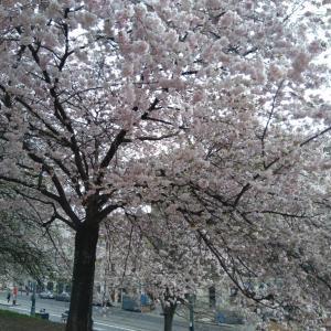 春の週末散歩。in プラハ