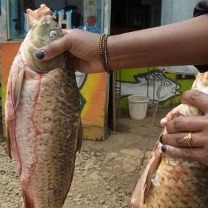 つかの間のナイロビ、都市ライフ