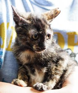 新しく猫をお家に迎えたら、なんとなく調子を崩す先住達。