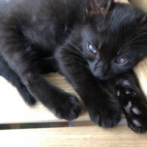 1277 これから良くなっていくよてい☆治療を頑張りながら、里親さん探しも頑張る猫さん