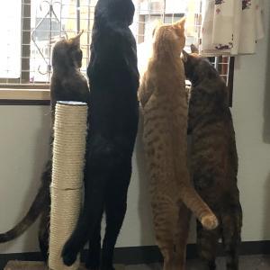 【スタッフの日記】猫を保護したら