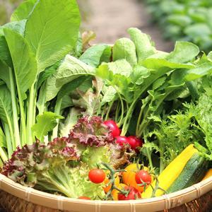 葉物野菜ダメにしてませんか? 腐らせないある方法を解説!