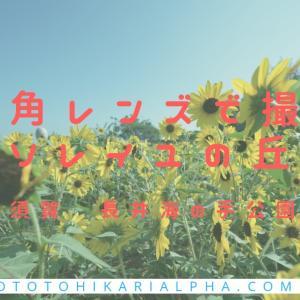 横須賀にある「ソレイユの丘」は親子連れにおすすめの公園 広角レンズSEL1224G作例にもどうぞ