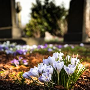 お墓は作るときもお金がかかるけれど仕舞うときもお金がかかるって知っていましたか?