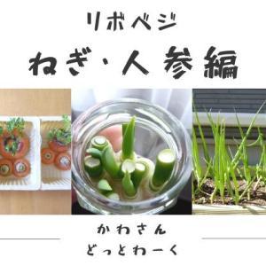 再生野菜「リボベジ」の育て方と成長記録【ねぎ・人参編】