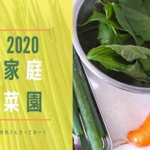 2020年は低コストなのんびり家庭菜園。