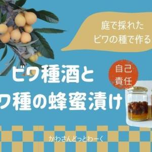 自己責任で!ビワの種で蜂蜜漬けとビワ種酒を作ってみた。