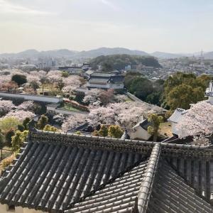 湯巡りNバン日本一周車中泊67日目 桜満開!春の京都と姫路城
