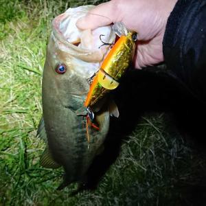 釣行記12 引き続き時間無く夜襲2回...から発見した新たな「釣れるネタ」