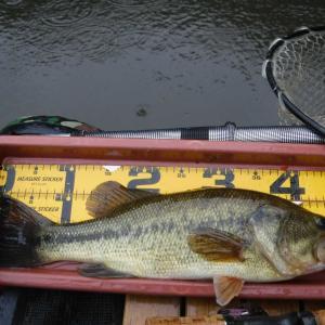 釣行記14 と「釣り履歴書」