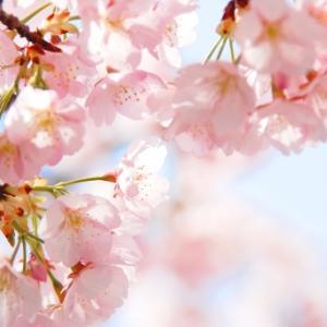 なぜ日本人は桜を愛してやまないのか 日本人の美意識を表す桜の魅力とは