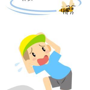 蜂の巣作りを発見!でも知っていれば怖くないアシナガバチの生態
