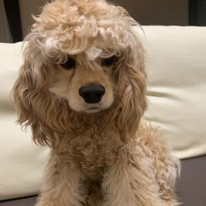 愛犬「MACAN」の成長記録