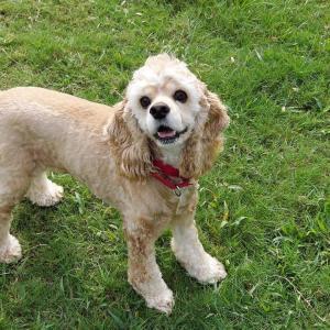 愛犬「マカン」の成長記録
