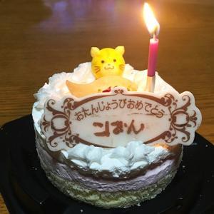 満1歳の誕生日を迎えることができました。お祝いに猫用ケーキ買ってきた!