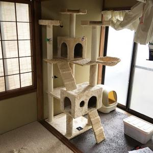 猫さんが2匹になったのでキャットタワーを設置しました。