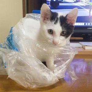 猫だけどアイスホッケーやってみた!