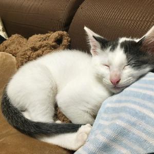 思いっきり遊んだらパパの枕で一眠り。