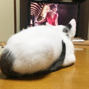 テレビ見てます。