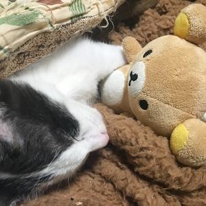 リラックマを抱っこして寝るの。