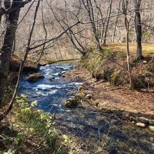 【自然だらけ】函館鱒川町の奥地に春がきた&早春の市民の森