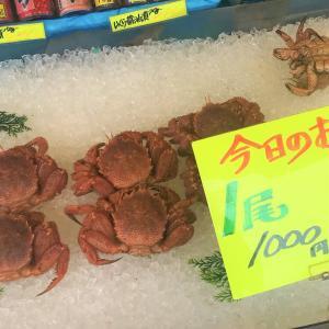 【価格破壊】函館朝市で生きた毛ガニを1000円で買ってきた件