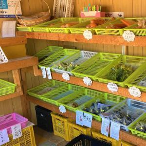 【野菜直売所】函館 野菜100円ショップ しげ で新鮮野菜を買ってみた