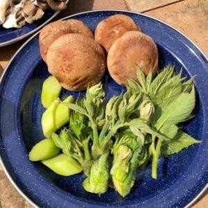 庭の山菜が採れたので天婦羅をしました!その(2)