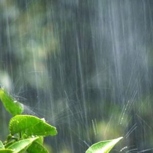 東北福島デリヘル風俗 福島美女図鑑 7月29日(水)大雨