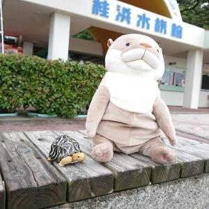 桂浜水族館 おっさんカワウソ