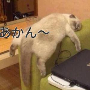 風邪で寝込んでました(^^;。冬物断捨離したら、また入ってきました。