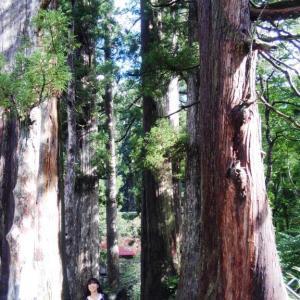 白山中居神社 大自然がそのまま残り、そこにいると清らかになるような気がします