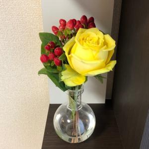 【kin191】黄色いバラ