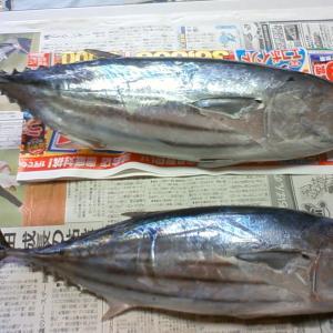西伊豆 戸田湾 たか丸の係留船での釣りを攻略
