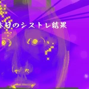 株シストレ 3月2日 +24万円