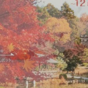 東山動植物園の紅葉とライトアップを無料入場