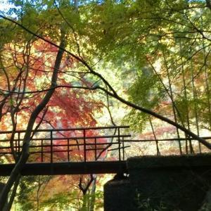 愛岐トンネル群 第22回秋の特別公開へ行ってきました その2