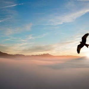 ナバホ族の動物に関する迷信7選