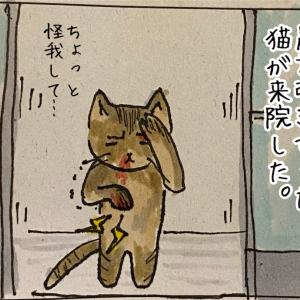 猫を拾った話