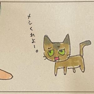 猫がきてからの一週間の話