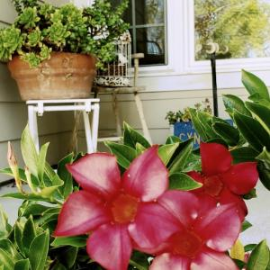 前庭のお花たち✿