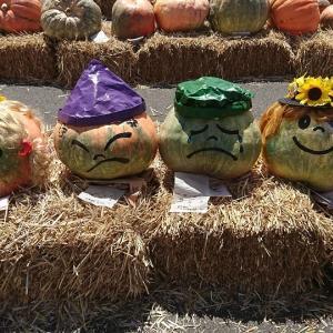 ハロウィンへ向け巨大かぼちゃはいかが!?愛媛発の「どてかぼちゃカーニバル」!!