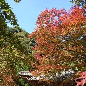 秋の西山興隆寺で紅葉とグルメを楽しむ