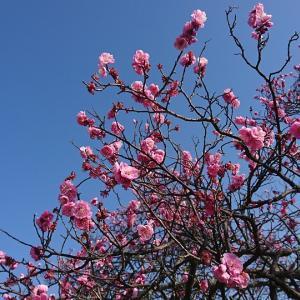 ロッジが新設!梅津寺公園でのんびりと観梅や花見、ついでに松山観光もどうですか!