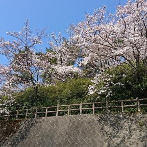 伊予市を一望できる谷上山公園の展望台と桜